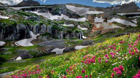 flowers, mountains, snow