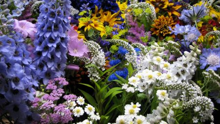 flowers, muscari, many