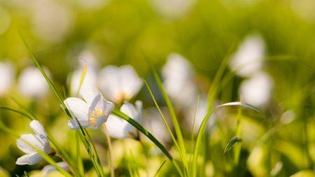 flowers, nature, field
