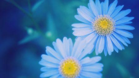 flowers, petals, dark