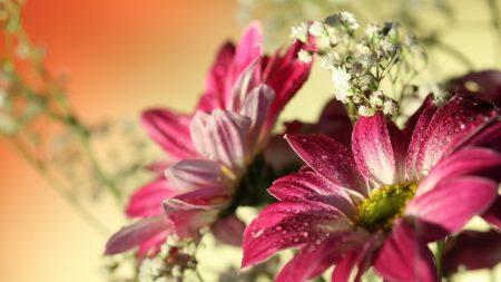 flowers, petals, drops