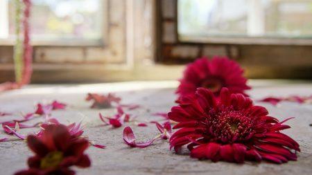 flowers, petals, fallen
