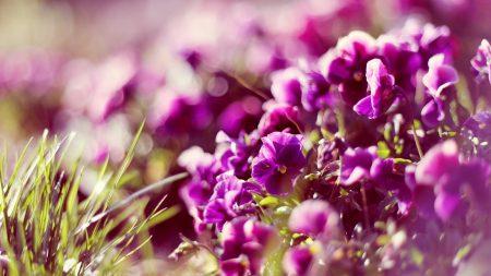 flowers, petals, glare
