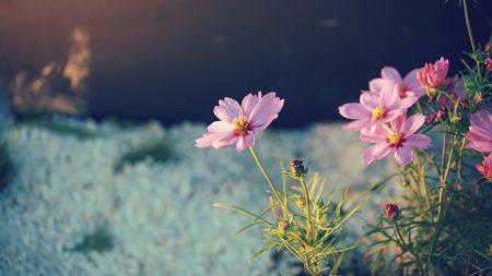 flowers, petals, green