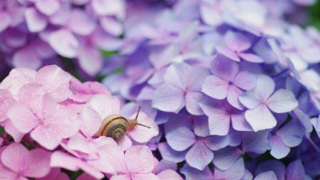 flowers, petals, snail