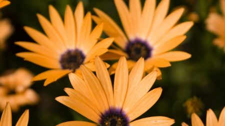 flowers, petals, three