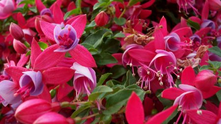 flowers, pink, stamens