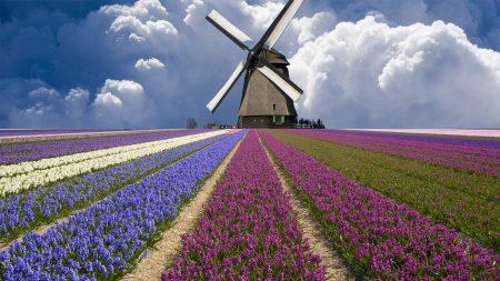 flowers, plantation, mill