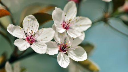 flowers, plants, bloom