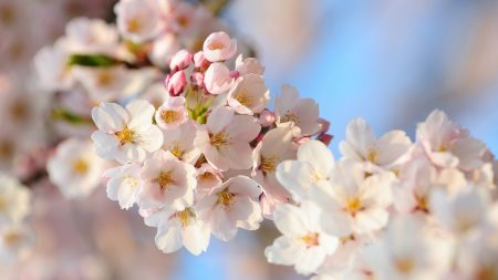 flowers, plants, tree
