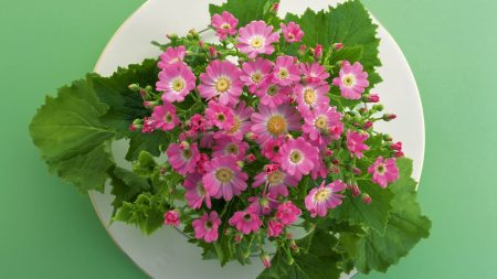 flowers, plate, small
