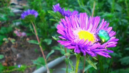 flowers, pollen, insects