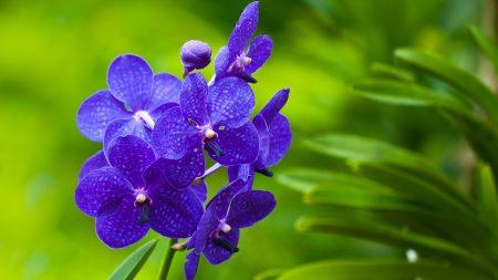 flowers, purple, bright