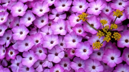 flowers, purple, yellow