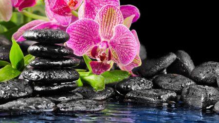 flowers, rocks, drops