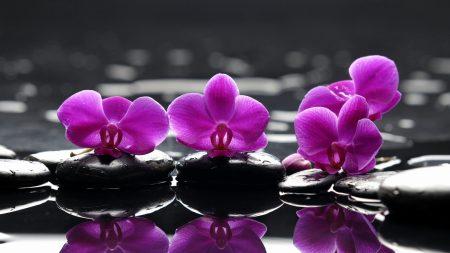 flowers, rocks, water