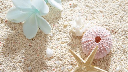 flowers, sand, seashells