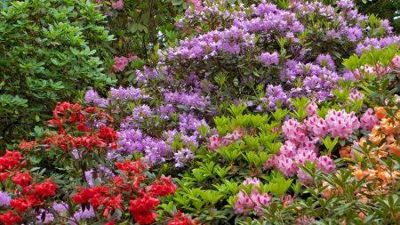 flowers, shrubs, different