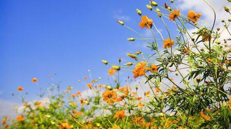 flowers, sky, lawn