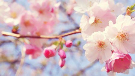 flowers, spring, bloom
