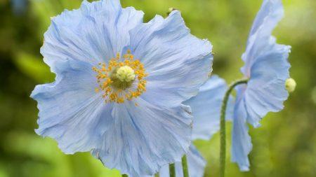 flowers, stamens, closeup