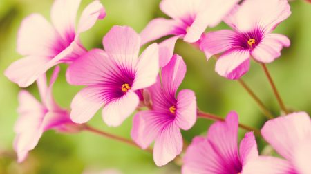 flowers, stamens, green
