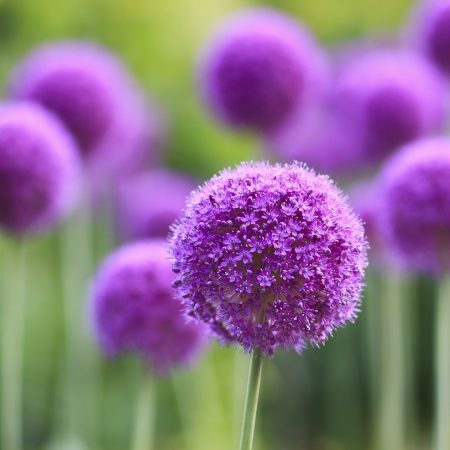 flowers, stems, bright