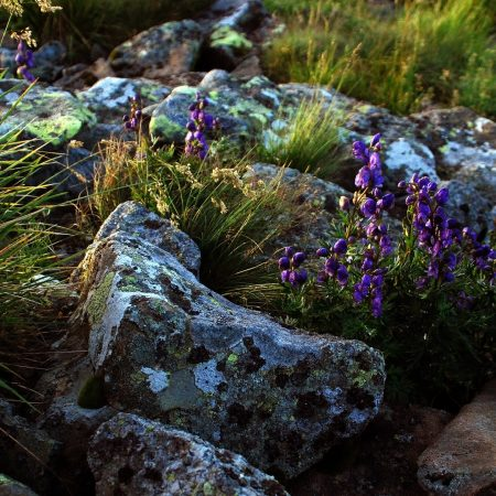 flowers, stones, lilac