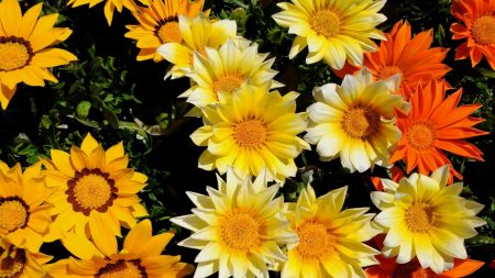 flowers, sun, greenery