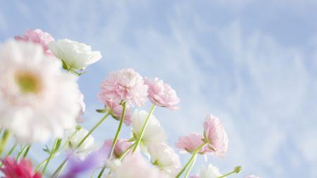 flowers, tender, buds