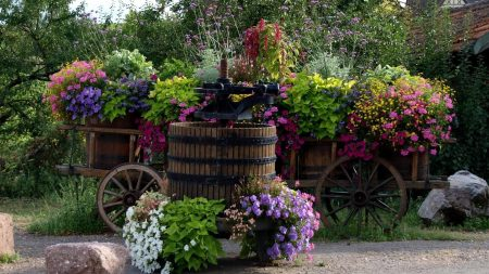 flowers, variety, cart