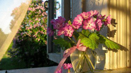 flowers, vase, window