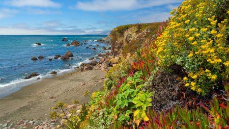 flowers, vegetation, coast
