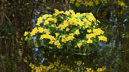 flowers, water, reflection