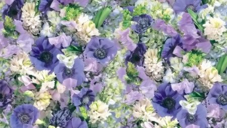 flowers, white, blue