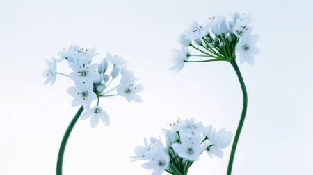 flowers, white, light