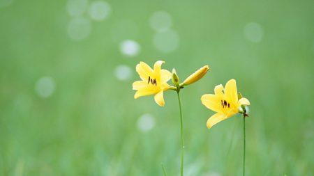 flowers, wild, couple