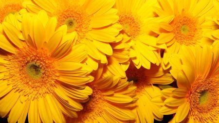 flowers, yellow, bright