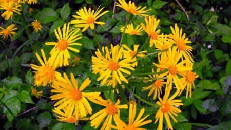 flowers, yellow, flowerbed