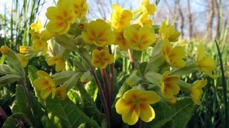 flowers, yellow, green