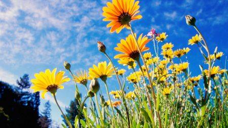 flowers, yellow, sky