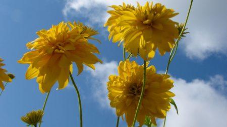 flowers, yellow, stems