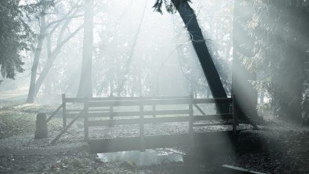 fog, bridge, wood