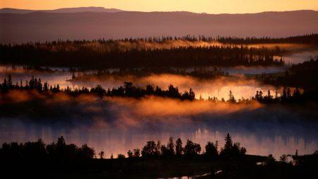 fog, river, trees