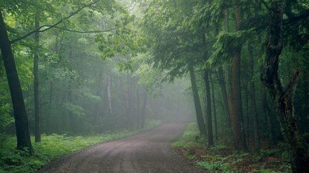 fog, road, wood