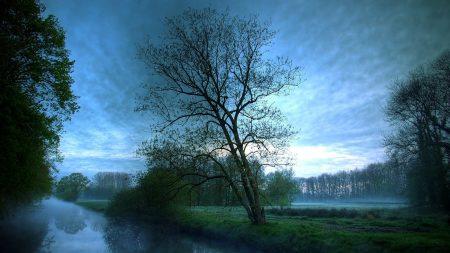 fog, trees, river