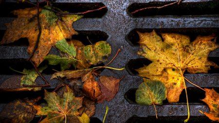 foliage, grill, autumn