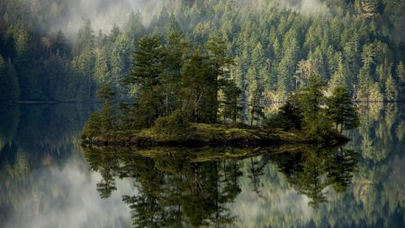 forest, lake, reflection