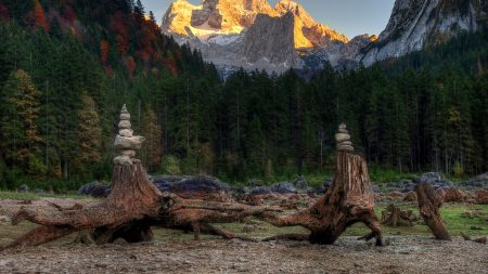 forest, mountains, driftwood