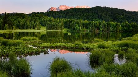forest, mountains, summer
